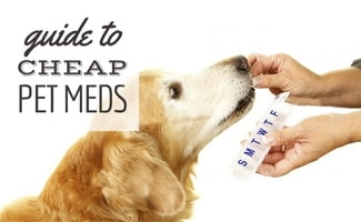 Golden being fed drugs by hand with pill box (caption: guide to cheap pet meds)