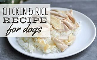 Plate of chicken and rice (Caption: Chicken And Rice For Dogs)