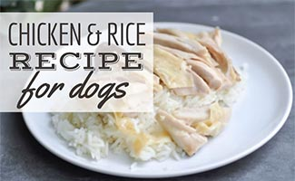 Plate of chicken and rice (Caption: Chicken & Rice Recipe For Dogs)