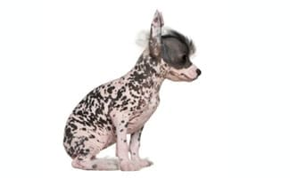 ... : List Of Non Shedding Dog Breeds Picking The Best Dog Breed For Your