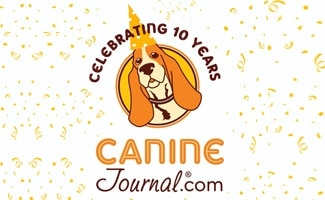Celebrating 10 Years of Content for Canine Journal