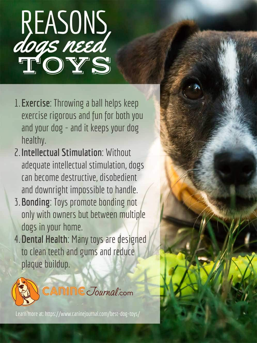 4 Reasons Dogs Need Toys