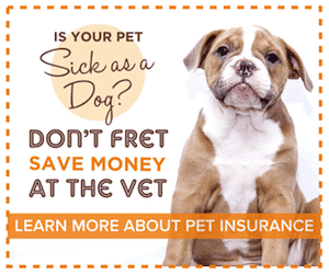 Cute Puppy: Save Money at the Vet with Insurance