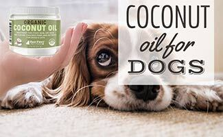 Dog laying next to hand with coconut oil (caption: Coconut Oil For Dogs)