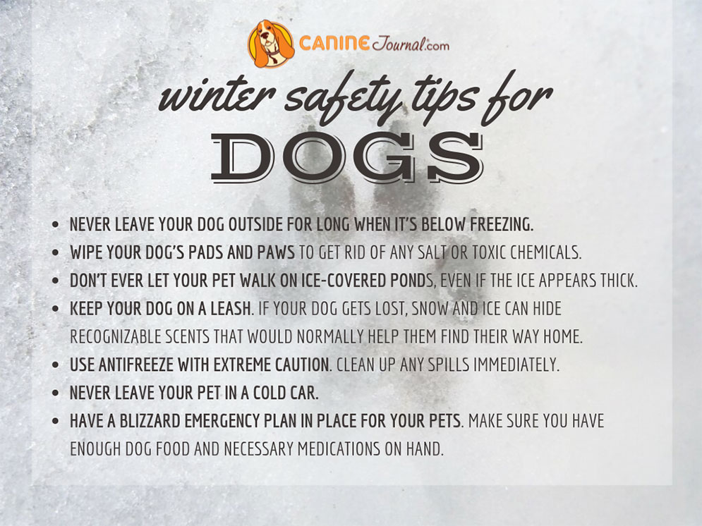 Pet Safety Tips For Cold Weather