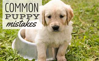 Puppy sitting in water bowl in grass (caption: Common Puppy Mistakes)
