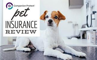 Dog at vet (caption: Companion Protect Pet Insurance Review)