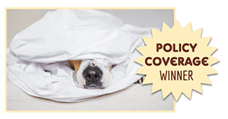 Dog under covers (caption: Policy Coverage Winner)
