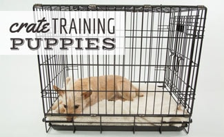 Crate Training Your Puppy The Key To A Free Home
