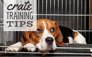 Beagle sleeping in crate (caption: Crate Training Tips)