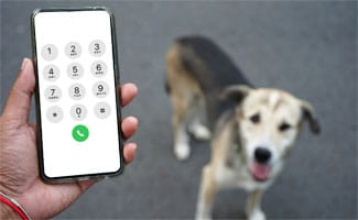 Person with phone in hand and dog looking up