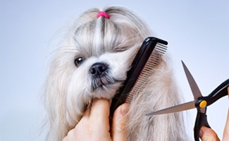 Toy dog with shears and brush around face