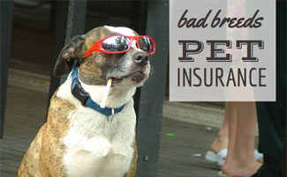 Dog with sunglasses: Dog Liability Insurance