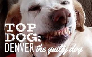 Denver the Guilty Dog