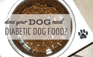 Bow of dog food: Does Your Dog Need Diabetic Dog Food?