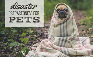 Dog in blanket in field: Disaster Preparedness for Pets