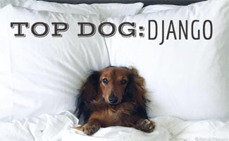 Django the Dog in bed