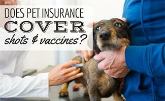 Dog at vet getting a shot (Caption: Does Pet Insurance Cover Shots & Vaccines?)