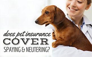 Vet holding dog (Caption: Does Pet Insurance Cover Spaying & Neutering?)