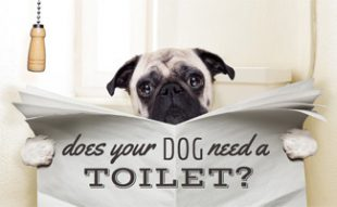 Dog sitting on toilet reading paper: Does Your Dog Need a Dog Toilet?