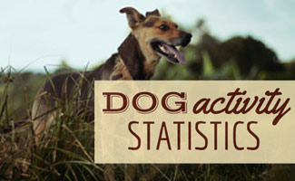 Dog in field: Dog Activitiy Statistics