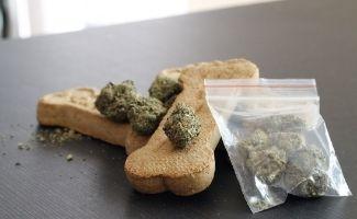 Bag of marijuana next to dog cookies