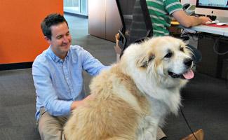 Large Dog at PetPlan office