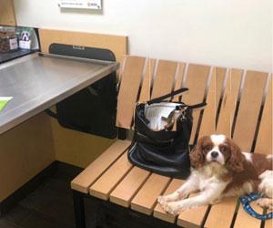 Dog at vet office