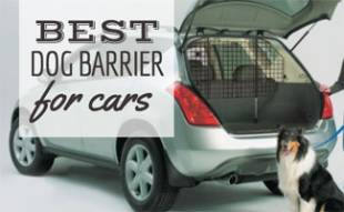 Dog outside car with dog barrier