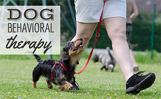 Dog behaviorist with dog on leash (caption: Dog Behavioral Therapy)