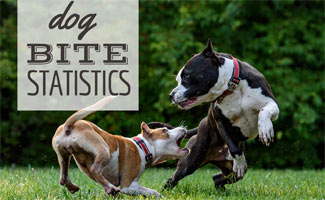 Dog Bite Statistics How Likely Are You