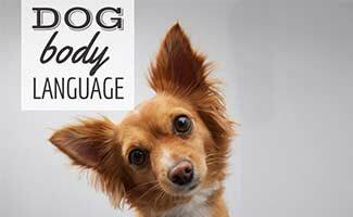 Dog with head tilted (Caption: Dog Body Language)