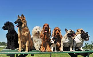 dog breeds lined up