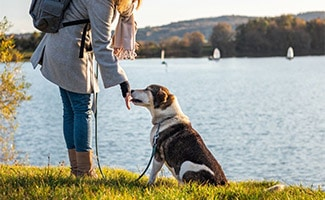 Dog by the lake on a leash with a woman