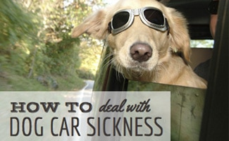 Dog hanging out side of car with googles on: How to Deal With Dog Car Sickness