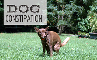 Dog pooping in grass (Caption: Dog Constipation)