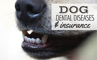 Dog with white teeth up close (caption: Dog Dental Diseases and Insurance)
