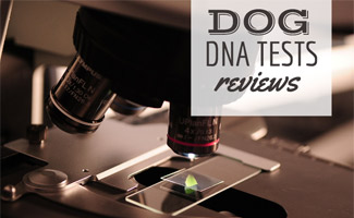 Microscope (caption: Dog DNA Tests Reviwes)