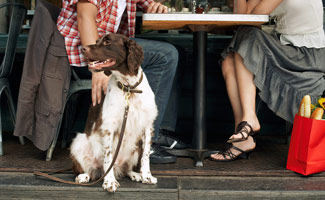 Dog eating with couple in restaurant