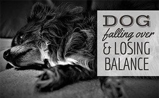 Dog laying on side (caption: Dog Falling Over & Losing Balance)