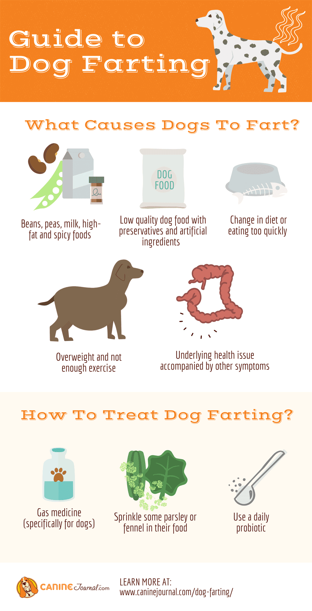 Dog Farting Infographic