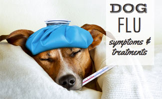 Sick dog on bed with flu