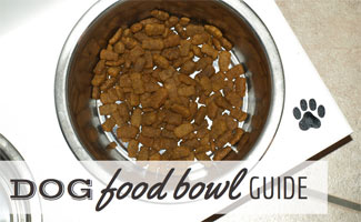 Dog bowl with food: The Ultimate Dog Food Bowl Guide!