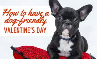 Dog on red pilllow (caption: How To Have A Dog-Friendly Valentine's Day)