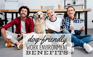 Three business colleagues and a dog sitting in front of a wooden conference table with their tongues out (Caption: Dog-Friendly Work Environment Benefits)