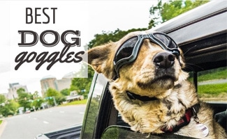 Dog with goggles on hanging out car window (caption: Best Dog Goggles)