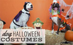 Dogs in Halloween costumes: Dog Halloween Costumes: Don't Let Your Dog Go Naked