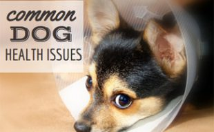 Common Dog Health Issues