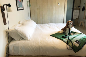 Dog on a bed in a hotel
