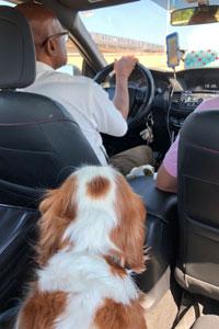Dog in uber